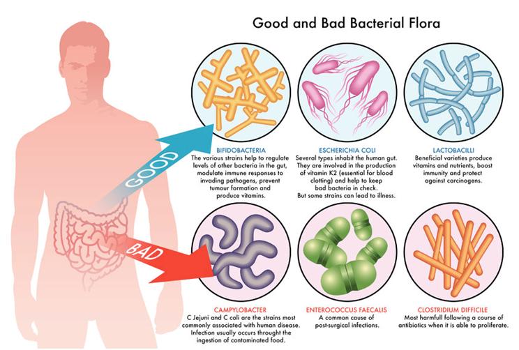 News   BIOM Probiotics   Sarasota   Microbiome's health   Microbiome Diversity